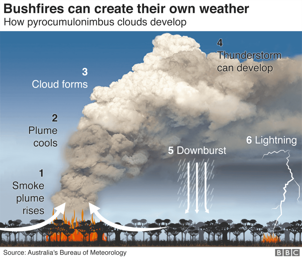 山火事のサイクル
